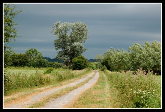 track westonzoyland somerset countryside nature somersetdreams favesongs