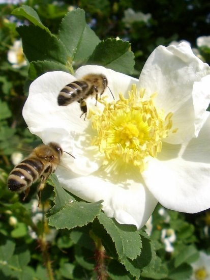 bees and the tasty flower
