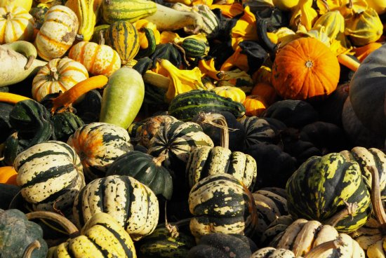 gourds and squash galore