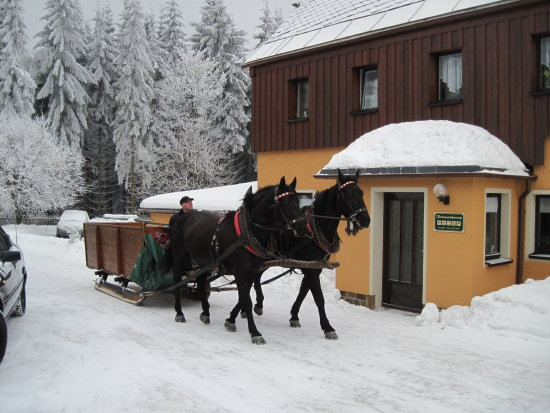 Winter Horses Germany