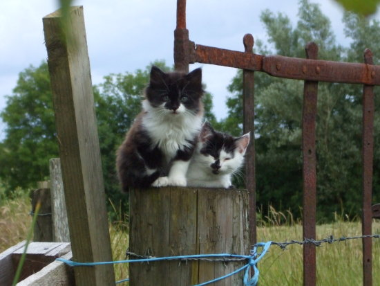 this is fuzz (on the right) and his brother jynx (on the left he died)