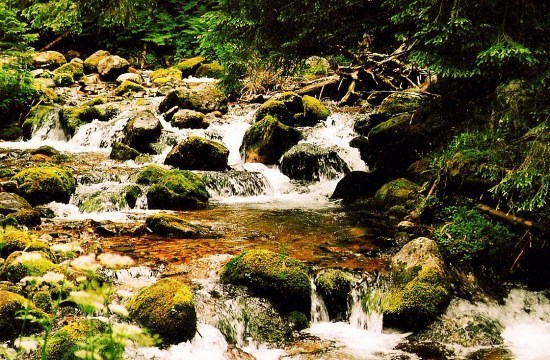 walking in the National Park of Tatra mountains, good night and dream sweet dreams! :)