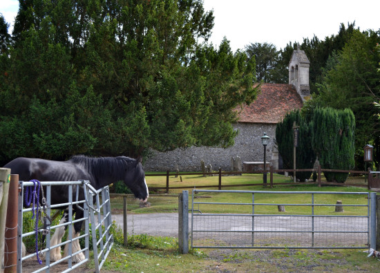 14. Near the entrance to the farm, as well as a rather unfriendly shire horse, there was a sweet ...