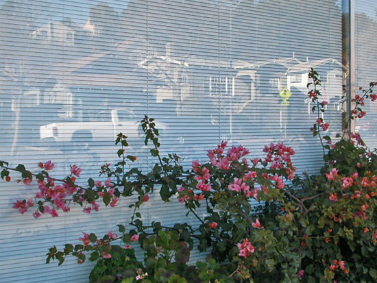 bougainvillea window reflections oakland myoaklandfph
