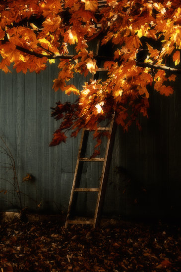 fall leaves ladder