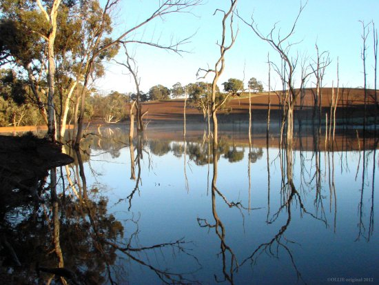 reflectionthursday early morning farm dam perth hills littleollie