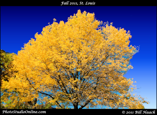 stlouis missouri usa fall season colors change 100911