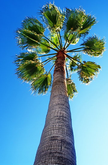 palm tree blue sky green leaves