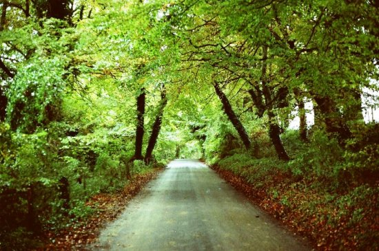 English countryside trees road