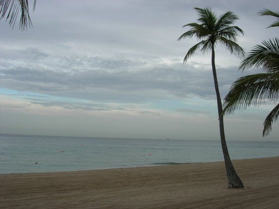 beach florida miami fort lauderdale sea ocean