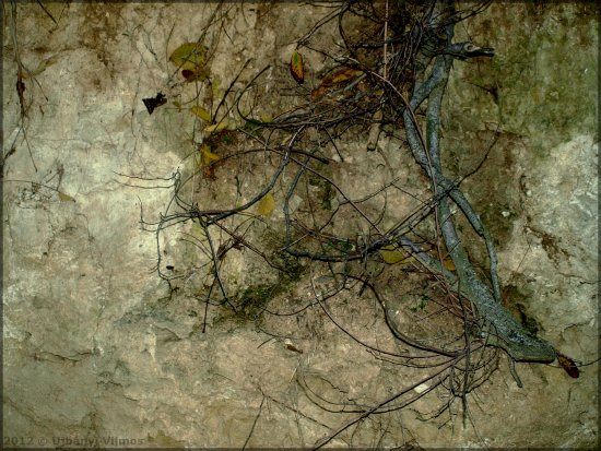 nature closeup sand wall loess roots leaves shadows textures