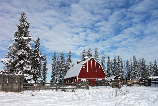 Winter in Alberta