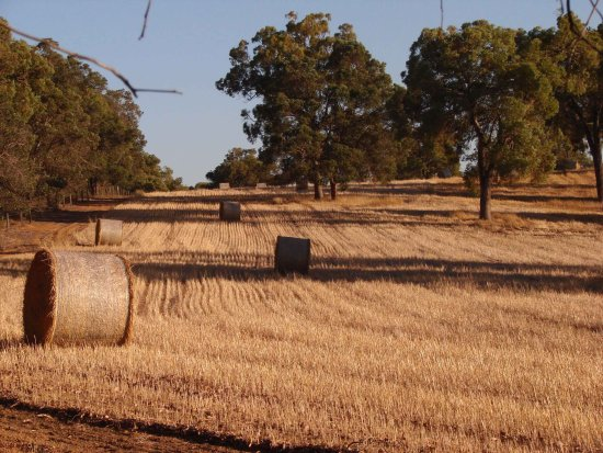 field early morning hay bales perth hills littleollie