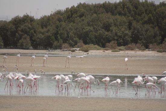 Flamingos pink bird nature reserve