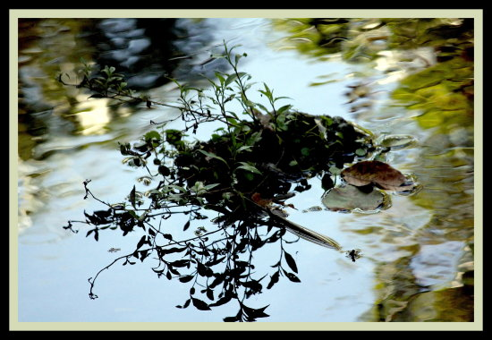 Life in the Water. Reflection of life
