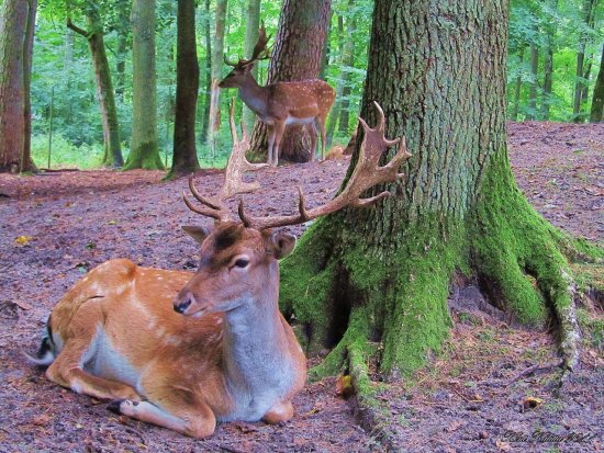 Deers Angelholm Citypark Sweden Skane Forest Green September 2011