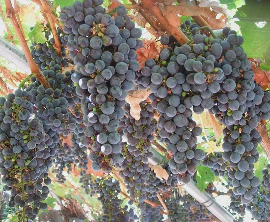 4/13