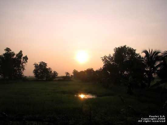 landscape nature thailand poulets 2008 rural carshot morning sunrise