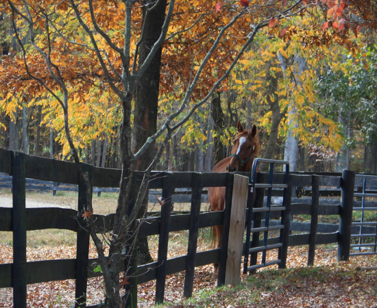 horse autumn stable