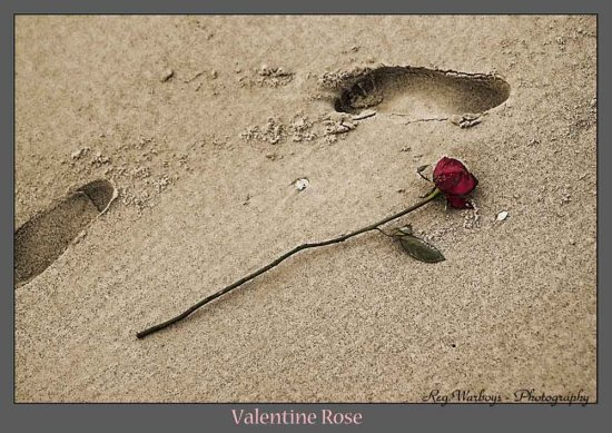 Fallen love washed up rose valentine