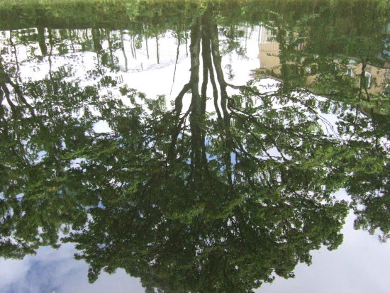 canal tree reflection london canalclub
