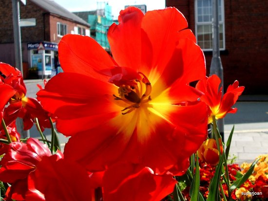 A splash of red on the high street