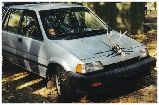 honda civic wagon deer skull antlers get the f outta my way