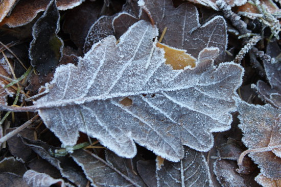 frozen leave