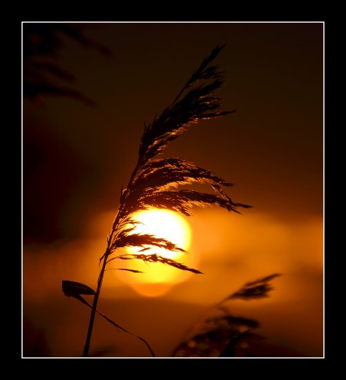 sunset reeds somerset somersetdreams light sun nature birthday