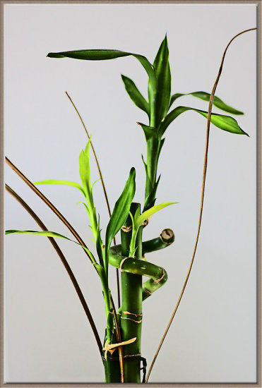 still life bamboo oriental Asian