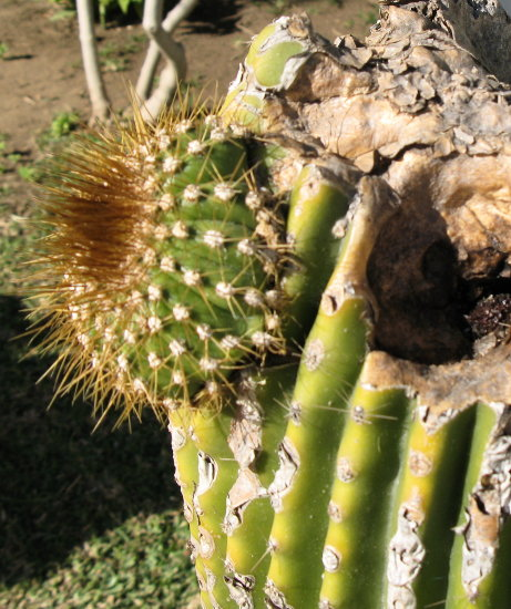 Spain Torremolinos nature cactus