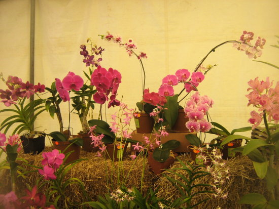 Orchid show at Magoebas kloof