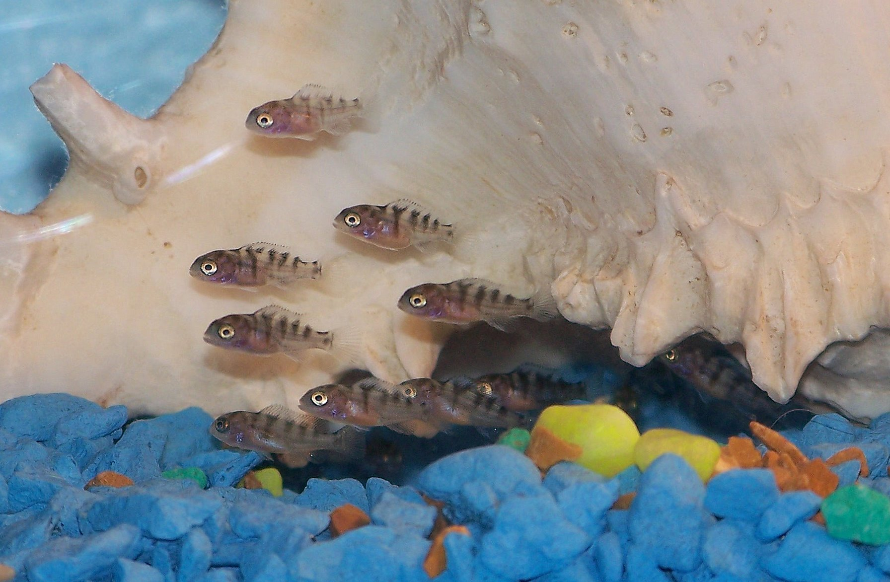 Image Gallery new born baby fish