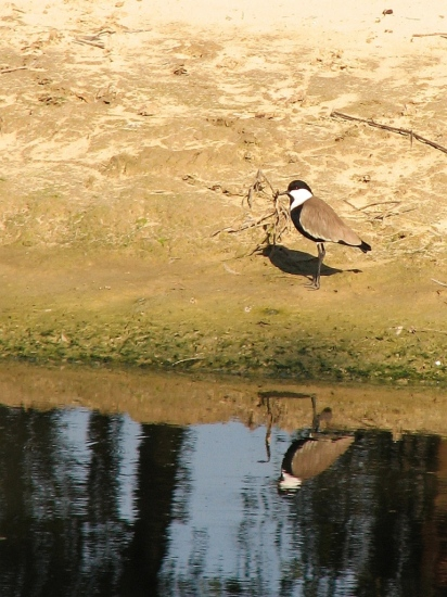 I, my shadow and my reflection, the three of us are having fun in the sun�