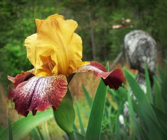 dirtgirls iris curves