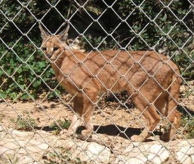 chain link fences in zoos