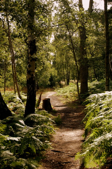 pathfriday witley common surrey