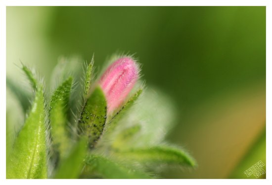 macro plants flower bud bloom