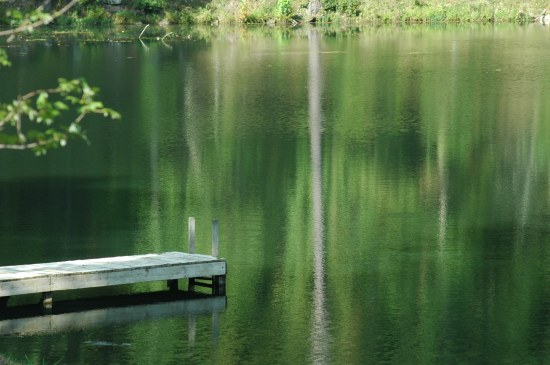 dock pier water reflection serene trees nature