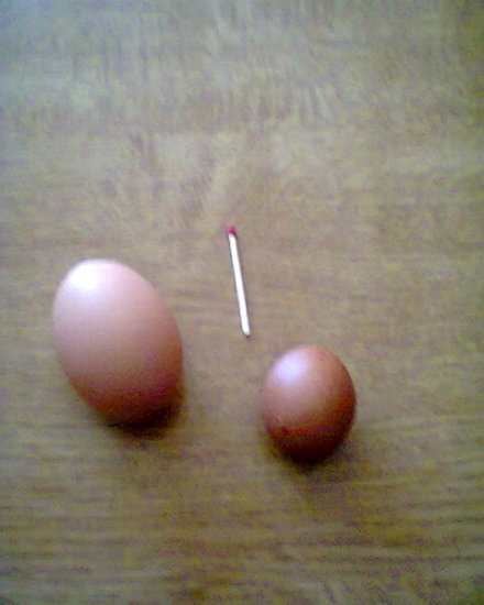From a very young chicken the first egg