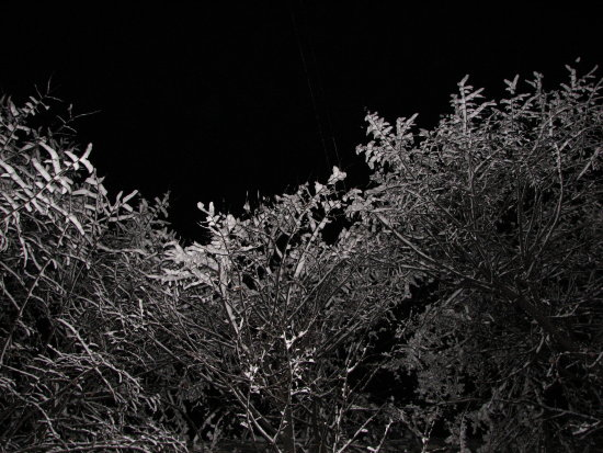 snow tree night