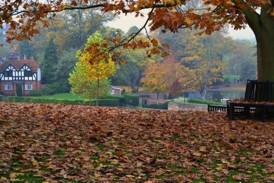 Autumn in the Park 1
