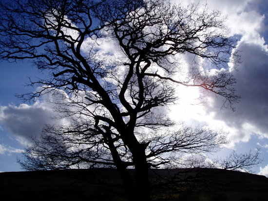 Tree sky North Yorkshire Moors