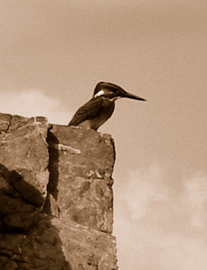 a kingfisher on its holidays in cyprus.