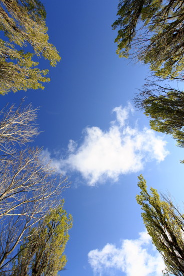 skyscape trees