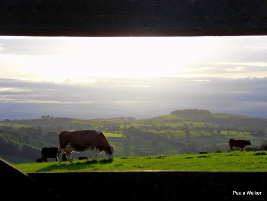 Cow gate view scenery Derbyshire