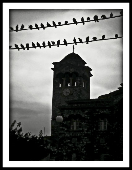bw church pigeons