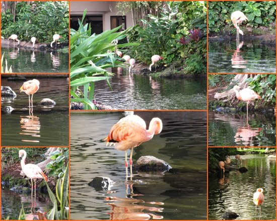 Hawaii Maui birds flamingo 22122012