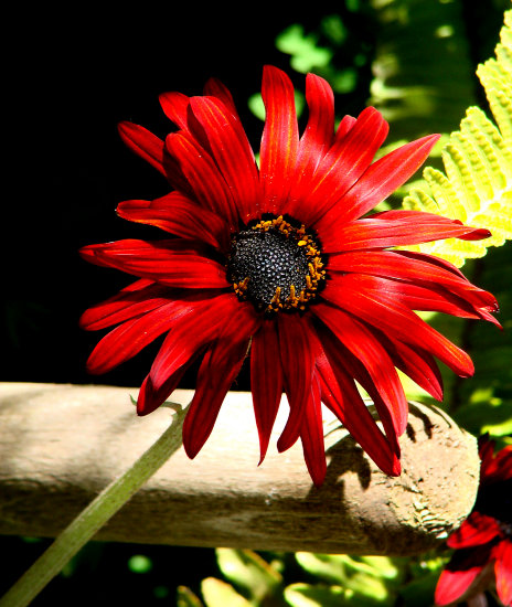 flowers nature spring concon chile
