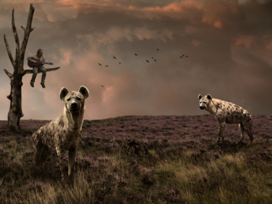 hyena music guitar moor cat photomontage
